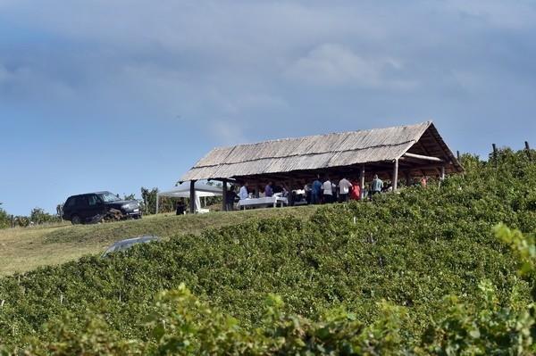 Devet godina vinarije Quet Wine