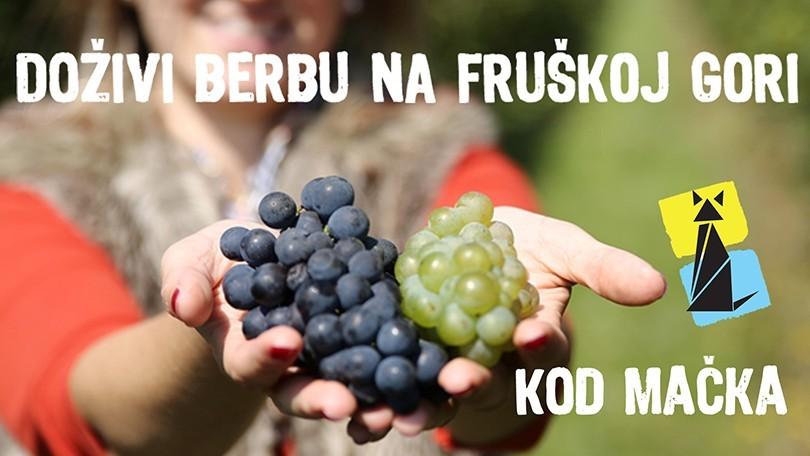 Doživi berbu u Mačkovim vinogradima